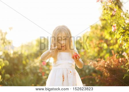 Nice little girl eating a tomato. She indulges. Girl soiled white dress in tomato juice. Sunset illuminates the flowing hair.