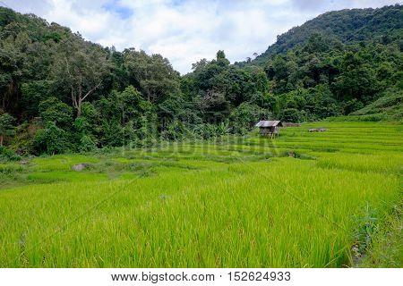 rice terrace at Mae Klang Luang Thailand