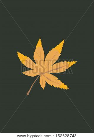 Maple leaf. Dark background. Autumn background. The background for the text. Elegant dark background. Leaf.