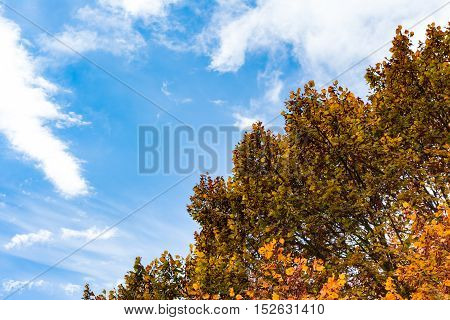 Blue Sky Autumn Orange Yellow Red Leaves Canopy Tree Background Nature Outdoors
