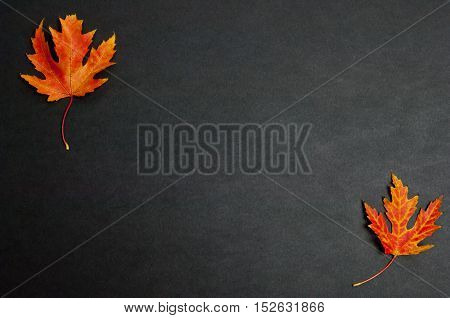 Autumn colorful fallen maple leaves on dark grey background with copy space