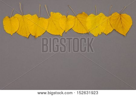 Pattern of autumn colorful fallen leaves on grey background with copy space