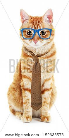 Funny cat with tie and stylish glasses isolated on white