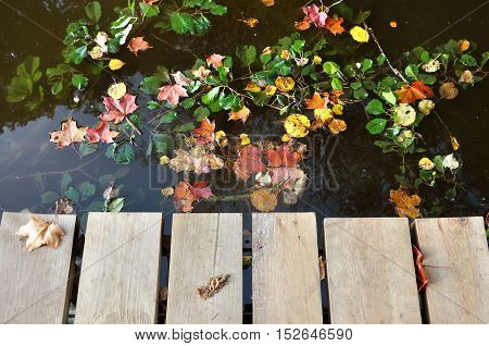 Wooden pier on the background of the water surface with maple and green leaves.