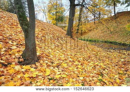View of hilly autumn park with maples and yellow fallen leaves.
