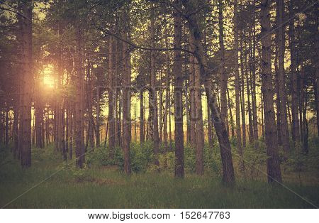 Dramatic Photo Of A Forest Scene