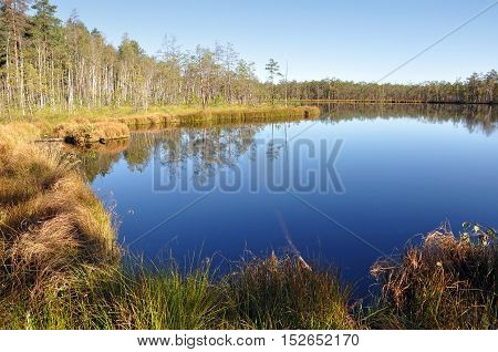 Blue calm lake in the middle of swamps and woods in the morning in autumn. Belarus.