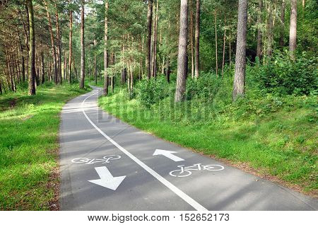 Two-way asphalt bike path in the summer pine forest in perspective.