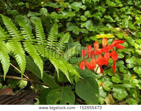 Beautiful flowers in the morning Indonesian forest