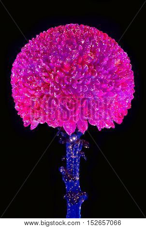 Flower with neon glow on a black background.