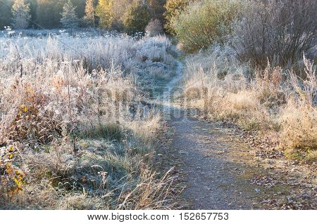 Beautiful autumn landscape in cold morning with first frost.