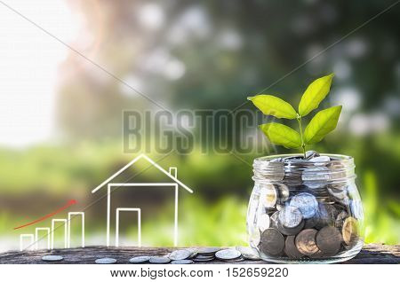 growing Money and plant Saving money concept concept of financial savings to buy a house and sunshine