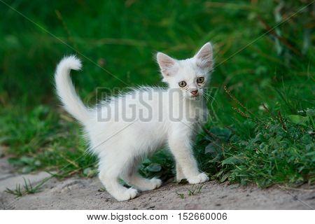 the white kitten on a green grass