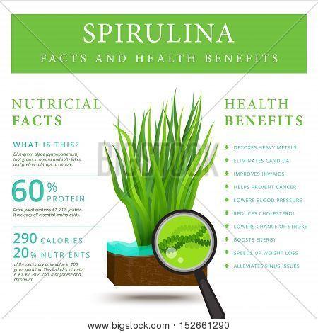 Set of spirulina algae infographics banner. Arthrospira seaweed dietary supplement background template. Superfood vector illustration