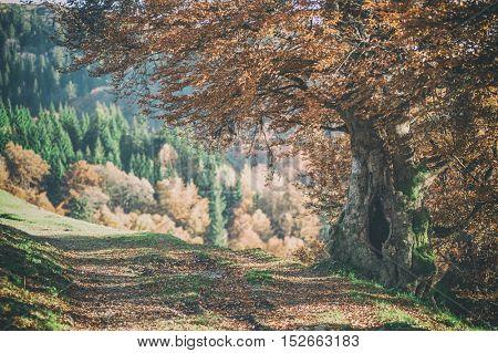 alone yellow tree close up