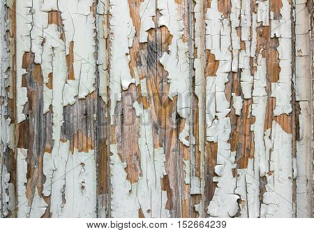 Wooden wall with white paint is severely weathered and peeling