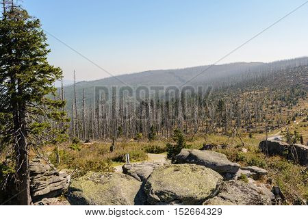 Dead Forest at Dreisesselberg - Nature reserve and region where three countries meet