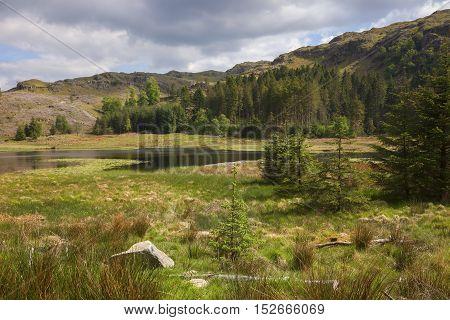 Marshland at Harrop Tarn, Lake District, Cumbria, England