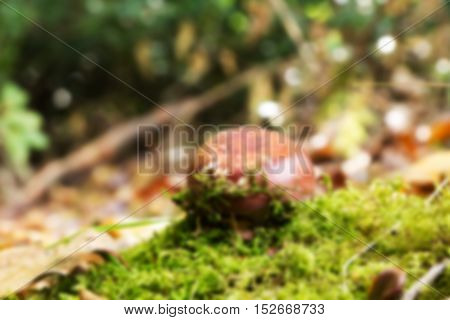 Toadstool On The Woodland Floor In Autumn Out Of Focus.