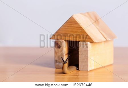 Slug gastropod mollusc in wooden house of toy building blocks copy space on timber desk