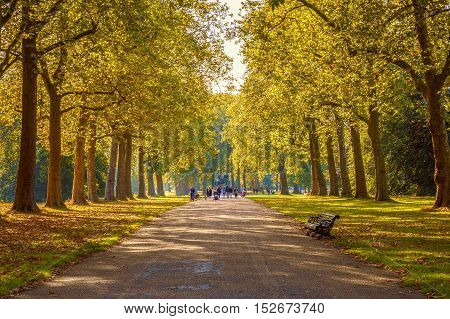 Tree lined street in Hyde Park London autumn season