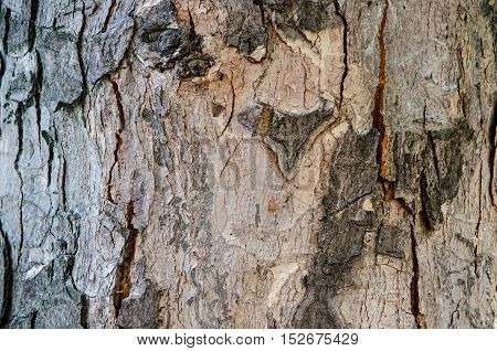 tree bark with cracks and streaks old wood