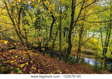 Colors of Autumn. Steep covered with fallen leaves from trees.