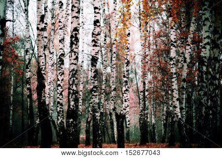 Autumn Trees Filtered