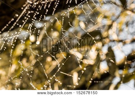 Spider web with dew in the sunshine. Macro image of a spider web with drops of dew lit by the autumn sun.