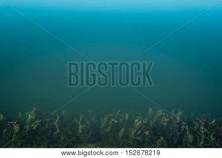 Clean blue water, sea weed. Top view of clean blue water of a lake with sea-grass in the bottom of the picture.