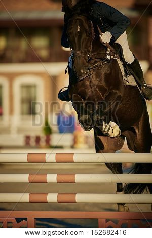 Rider on bay horse in competitions. Jumping show