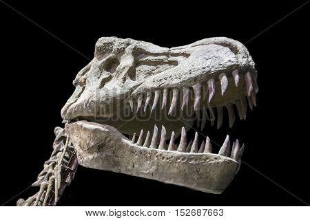 Tyrannosaurus Rex skull isolated over black background