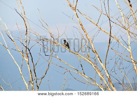 Bird on a bare tree in a beautiful autumn day