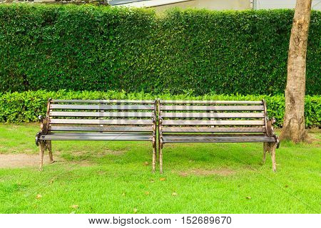 Stylish twin bench in summer Public park