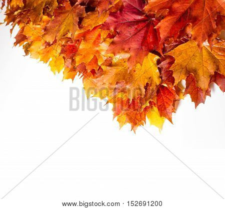 Texture, Background. Maple Leaves Yellow Shades Of Red And Gold. Leaves Abstract Laid-photos