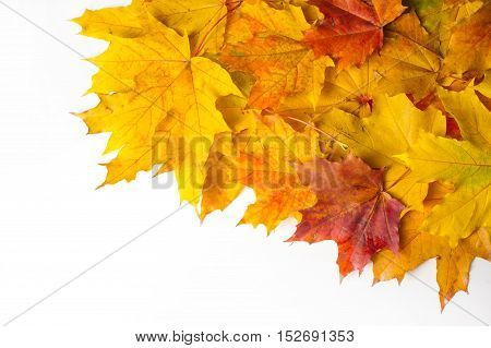 Texture, Background. Maple Leaves Yellow Shades Of Red And Gold. Leaves Abstract Laid For Photos. Th