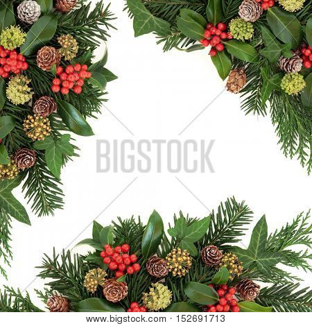 Traditional winter and christmas background border with flora of holly, ivy, cedar cypress, fir leaf sprigs and pine cones over white background.