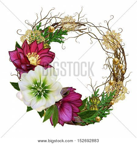 Christmas composition wreath. Weaving thin branches red white flower hellebore arborvitae branches green leaves pine cones golden snowflakes. Isolated on white background.