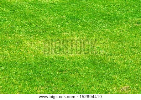 Texture, Background. Lawn Trimmed. Manicured Lawn