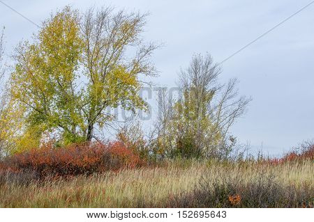 Autumn. Birch Linden, Larch, Oak, High Dried Grass. Painted Yellow Gold Color Red