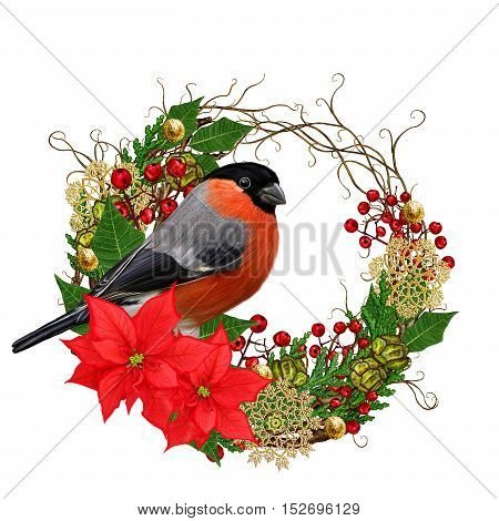 The bright red bird bullfinch burgundy flower hellebore weaving from twigs gold ornaments winter background Christmas composition. Isolated on white background.