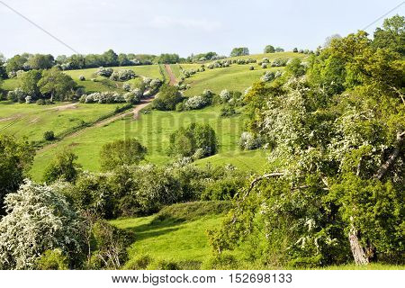 rolling hills of Cotswold rural countryside white hawthorn trees buttercups flowering meadows uphill hiking trail