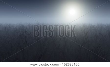 Aerial of winter forest in the mist.