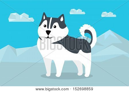 Siberian husky dog breed on snowy mountains background. Flat design vector. Domestic friend and companion animal. For traveling concept, racing sled dogs ad, native species habitat illustrating