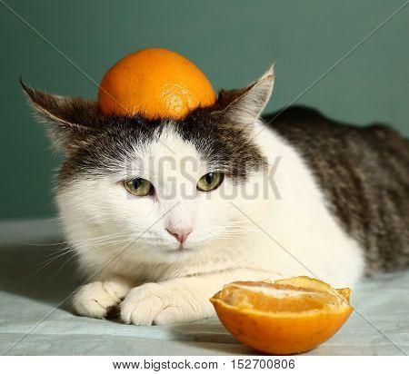 cat in funny orange cap close up photo