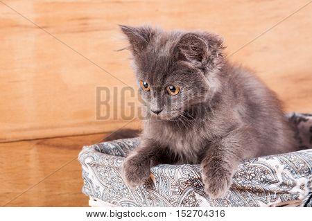Fluffy kitten in a white wicker basket