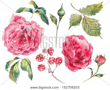 Set of floral vintage watercolor bouquet of roses leaves branches flowers, blackberries and wildflowers, botanical natural watercolor illustration isolated on white background