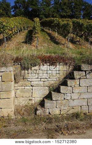 stairs in a vineyard on a winery