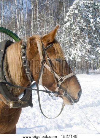 A Horse In Winter