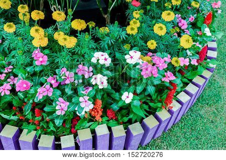 Colorful of beautiful background of garden flowers
